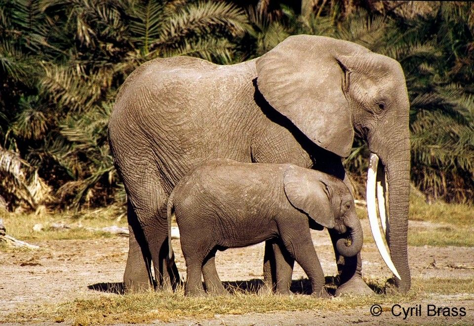 Elephant-Mother-with-Baby- Beside.jpg