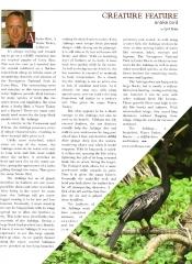 Anhinga Article
