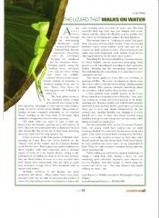 Basilisk Article