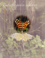 Butterfly Garden Article - Page 1