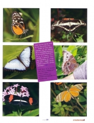 Butterfly Garden Article - Page 2