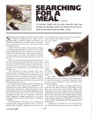 Coatimundi Article - Page 1