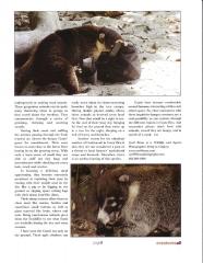Coatimundi Article - Page 2