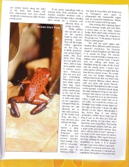 Frog Article - Page 2
