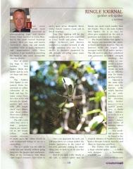 Golden Orb Spider Article