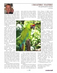 Green Macaw Article