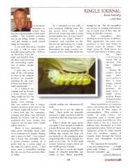 IO Moth Caterpillar Article