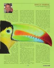 Keel Billed Toucan Article