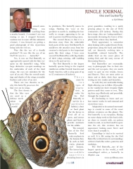 Owl Butterfly Article