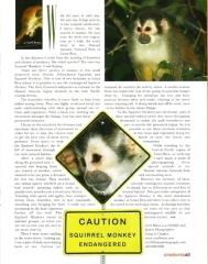 Squirrel Monkey Article