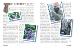 The Confused Sloth Article