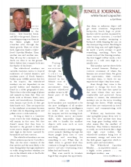 White Faced Capuchin Monkey Article