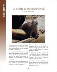 La vida silvestere en Centroamerica 1 - Pagina 18