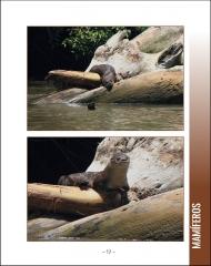 La vida silvestere en Centroamerica 1 - Pagina 19