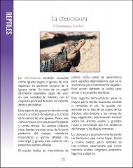 La vida silvestere en Centroamerica 2 - Pagina 32