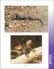 La vida silvestere en Centroamerica 2 - Pagina 33