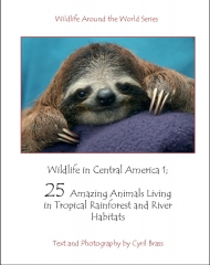Wildlife In Central America 1 - Front Page