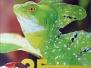 Wildlife Around the World Series - Photo Books