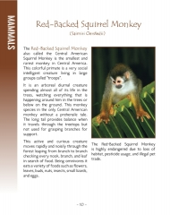 Wildlife in Central America 2 - Page 10