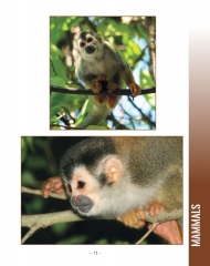 Wildlife in Central America 2 - Page 11
